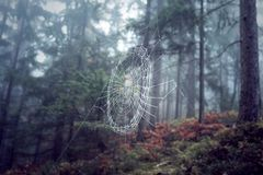 Spider web in foggy forest. Spider web in morning foggy forest landscape. Selective focus used royalty free stock photography
