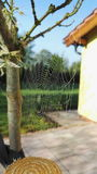 Spider web in the morning. Spider web in the fogy morning sun royalty free stock photos