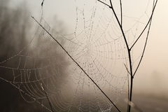 Spider web. Morning spider web in grass Royalty Free Stock Images
