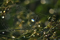 Spider web in the morning light Stock Images