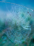 Spider Web in the morning. Spider web with water drops in the morning Royalty Free Stock Image