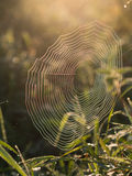 Spider Web in the morning Royalty Free Stock Images