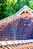 Spider web, Munduk, Bali, Indonesia Stock Image