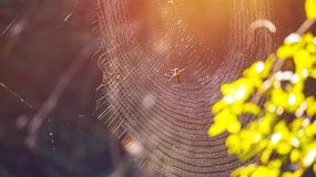 Spider on web, natural trap in forest. Poision spider on web, natural trap in forest Stock Image