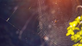 Spider on web, natural trap in forest. Poision spider on web, natural trap in forest Royalty Free Stock Images