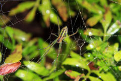 Spider And The Web In The Nature Stock Photos