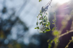 Spider web in the nature Stock Image
