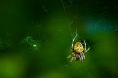 Spider on the web Stock Photo