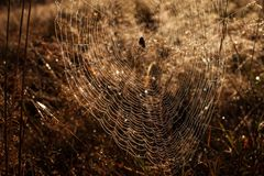 Spider web in nature full of water at sunrise royalty free stock photos