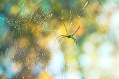 Spider and web in the nature Royalty Free Stock Photography