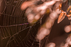 Spider web. In nature leaf backgroud Royalty Free Stock Images