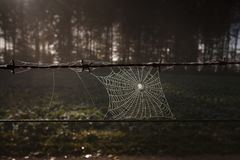 Spider Web, Nature, Light, Darkness Royalty Free Stock Images