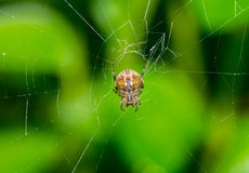 Spider and web in nature Stock Photos