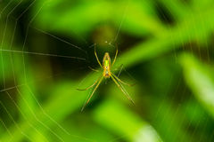 Spider and web in nature Royalty Free Stock Photos