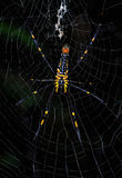 Spider on the web (Nephila maculata) Stock Photo