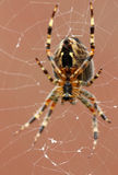Spider on the web at night. Royalty Free Stock Images