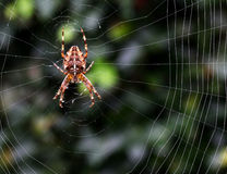 Spider on the web at night Stock Photos