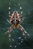 Spider on the web at night Royalty Free Stock Images