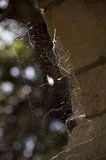 Spider web on an old brick wall Royalty Free Stock Photography