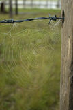 Spider web on Old Fence Stock Photo