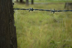 Spider Web on Old Fence Stock Photography