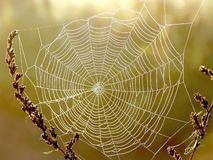 Spider Web On A Meadow At Sunrise Stock Photography