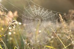 Free Spider Web On A Meadow On A Sunny Autumn Morning Close Up Of Cobweb On The Meadow On A Sunny Autumn Day Spiderweb Covered With Stock Photos - 139063103