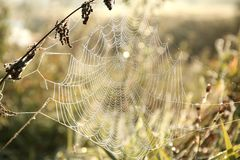 Free Spider Web On A Meadow On A Sunny Autumn Morning Close Up Of Cobweb On The Meadow On A Sunny Autumn Day Spiderweb Covered With Stock Image - 139063281
