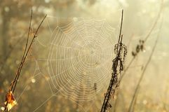 Free Spider Web On A Meadow On A Sunny Autumn Morning Close Up Of Cobweb On The Meadow On A Sunny Autumn Day Spiderweb Covered With Royalty Free Stock Photo - 139068745