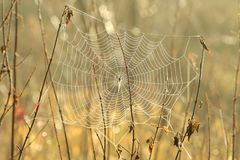 Free Spider Web On A Meadow Sunny Autumn Morning Close Up Of Cobweb The Day Spiderweb Covered With Dew Backlit By Rising Sun October Stock Photography - 139069382