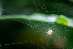 Spider on the web over green background waiting For Prey Stock Photo