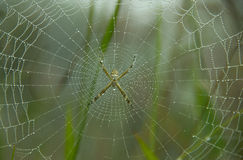 Spider and Web Stock Image