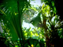 A spider in a web between palm trees. A spider building a web between palm trees at the Black Bear Wilderness Area in Sanford, Florida royalty free stock images