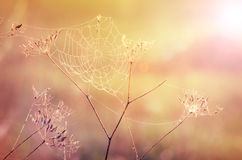 Spider web. And pastel color bokeh background royalty free stock photos