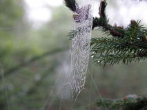 Spider Web Perfection Stock Image
