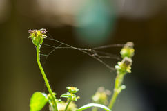 Spider web on plant Stock Image