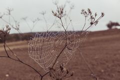 Spider Web on Plant Stem on Dry Land during Daytime Closeup Photography Stock Image