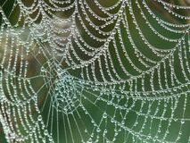 Spider Web With Rain Drops Royalty Free Stock Photography
