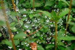 Spider web with rain drops, Hachioji, Japan Royalty Free Stock Photos