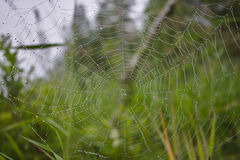 Spider Web with Rain in the Rainforest Stock Photography