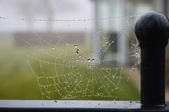 Spider web with rain in it. Stock Photography