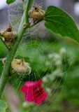 Spider web in raindrops stock images