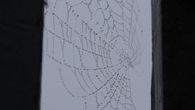 Spider Web with raindrops, trembling in the wind. London. England. United Kingdom. 17 December 2016. The average and close-up. Spider Web with raindrops stock video footage