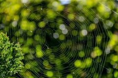 Spider web in the rays of the sun with green natural background. Royalty Free Stock Images