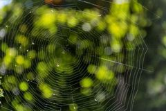 Spider web in the rays of the sun with green natural background. Royalty Free Stock Photo