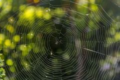 Spider web in the rays of the sun with green natural background. Stock Photo