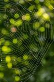 Spider web in the rays of the sun with green natural background. Stock Image