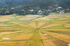 Land art with spider web rice paddy field Royalty Free Stock Photo