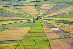 Spider web rice paddy field. Land art: Spider web like rice paddy field in Flores, Indonesia Royalty Free Stock Image