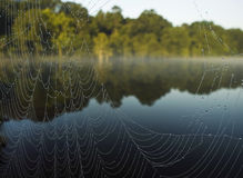 Spider web river Stock Photo